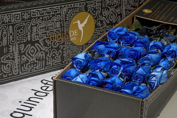 luxury galapagos roses box pack blue