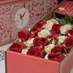luxury xmas roses box pack christmas