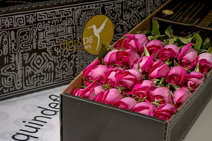 Pink panther roses the best pink roses of the world luxury pink roses box pack mightylinksfo